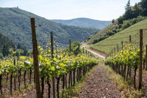 Wine trail istra kotli
